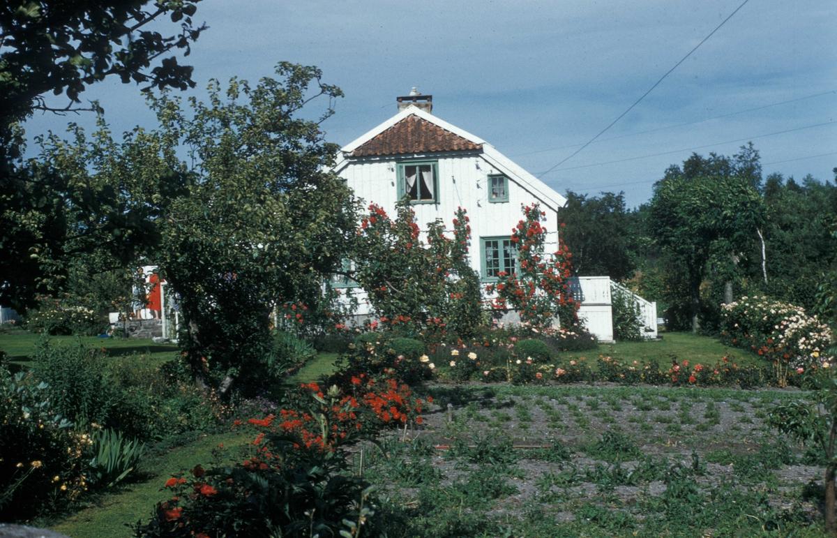 """""""Erigerons have"""". Huset og såfelt i forgrunnen."""