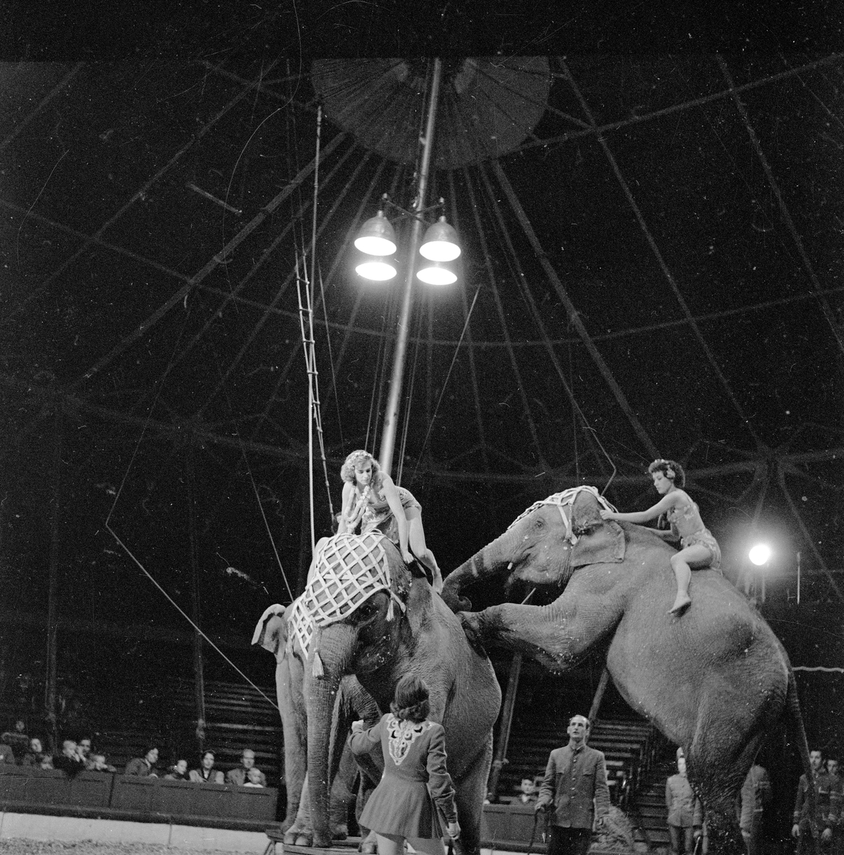 Oslo, september 1957, Sirkus Scott i byen, med elefanter, kameler, hester og sirkusartister.