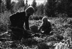 Storuman 1984. Potatisupptagning. Älgjakt. Dokumentation i s