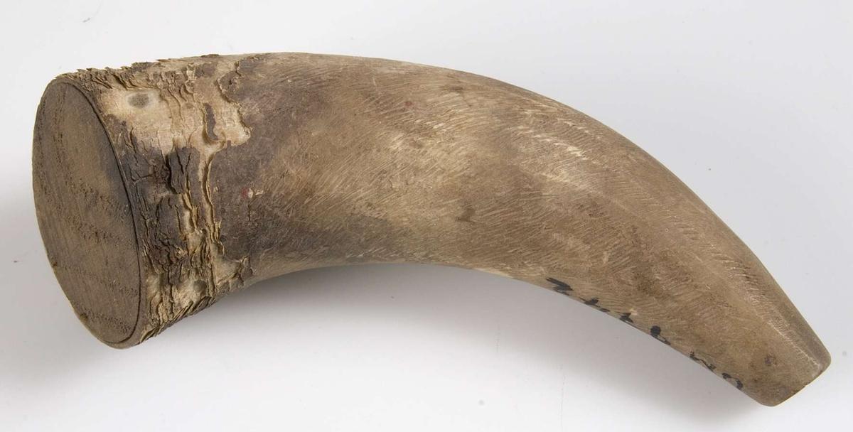 Kruthorn av vitgult matt horn med skadad yta. Träbotten. Propp saknas.