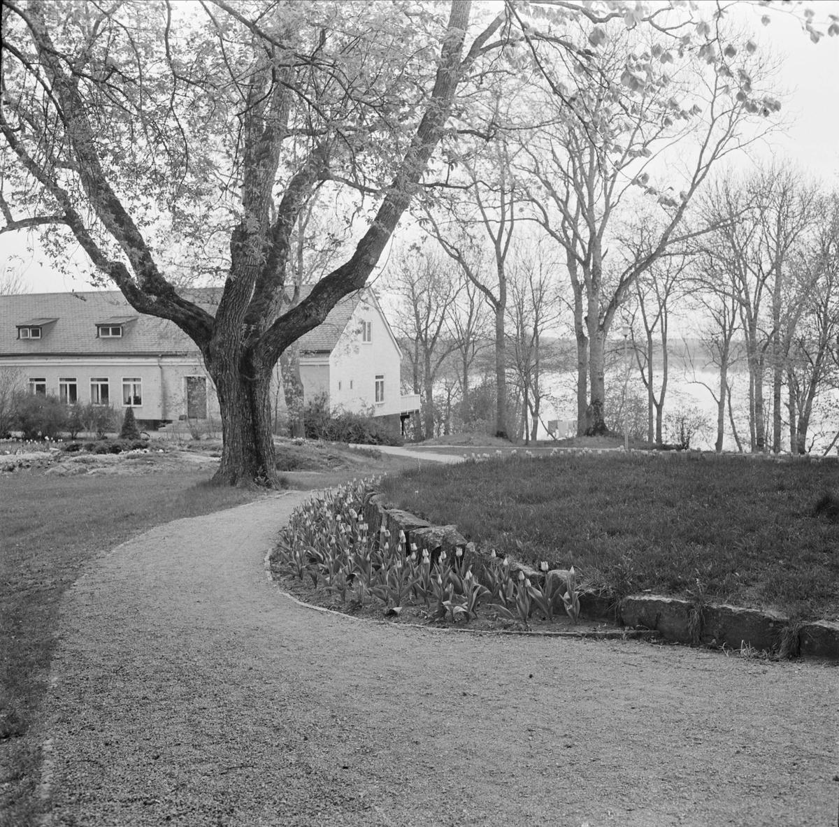 Slottsparken vid Wiks slott, Vik, Balingsta socken, Uppland maj 1965