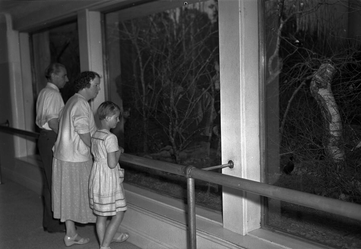Besökare på Biologiska museet, Skolparken, Uppsala 1956