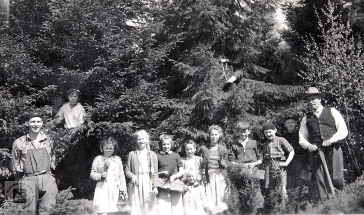 Viblemo folkeskole på skogplanting. Audnedal.