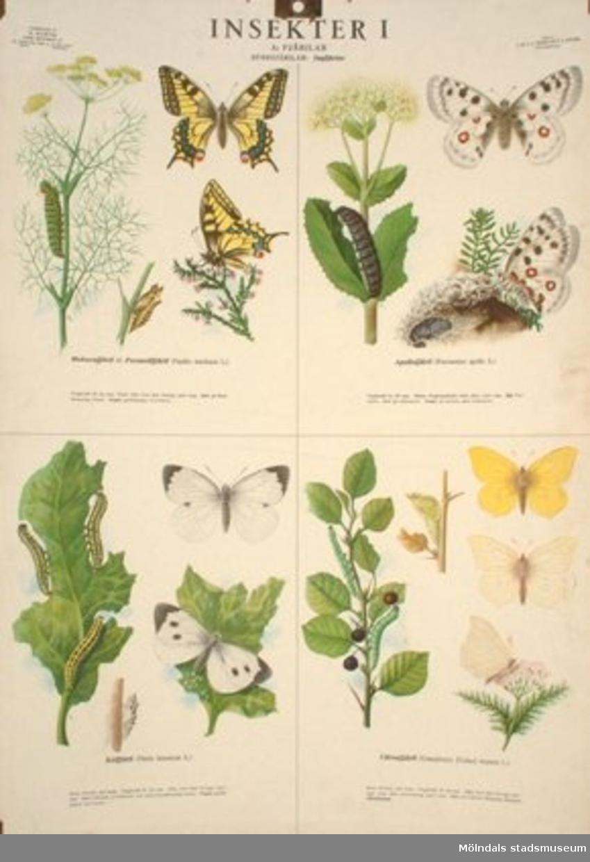Biologi.Insekter nr. 1: Fjärilar, storfjärilar.Utarbetade av M. Richter.
