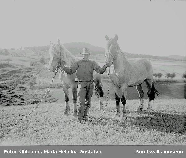 Porträtt. Man med två hästar i utemiljö.