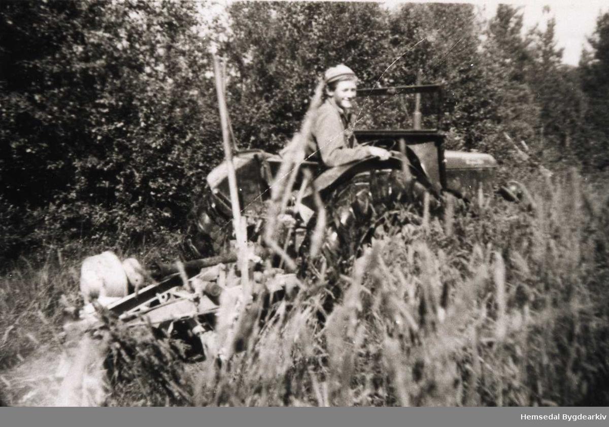 Traktoren er ein David Brown Corpmaster, ca. 34 Hk, 1948-modell som gjekk både på bensin og parafin. Her utsyrt med midtmotnert slåmaskin. Erik Langehaug ved rattet på søre Fossheim i Hemsedal..