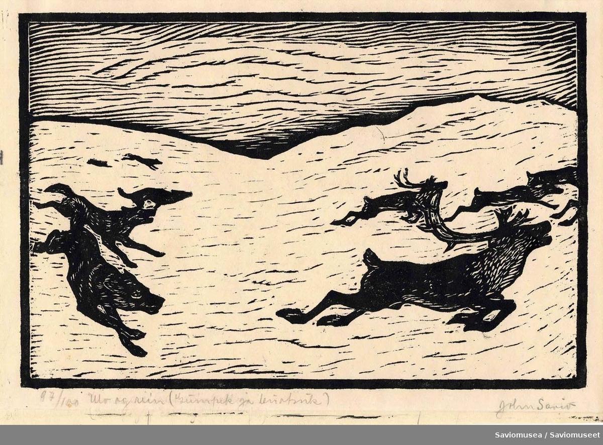 Reinflokk som flykter fra ulver i vinterlandskap.