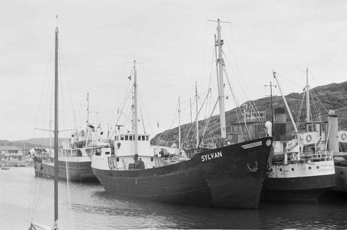 Fartyg: SYLVAN                         Reg. Nr.: 9552 Byggår: 1918 Varv: H. Appelo & Zonen, Zwartsluis Övrigt: Hemort: Skärhamn  Oosterschelde(1918)=Fuglen II(1939)=Fuglen(1951)=SYLVAN(1954)=Oosterschelde  1990-1992 återställd från lastfartyg till originalutförandet som tre-mastad toppseglad skonare.