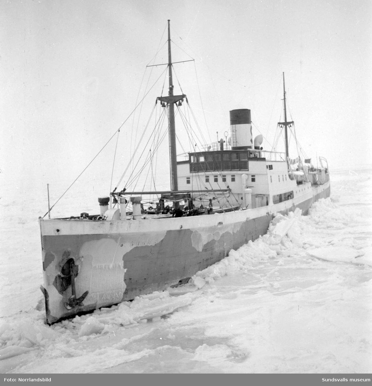 Isbrytaren Atle med flera i Sundsvalls hamn.
