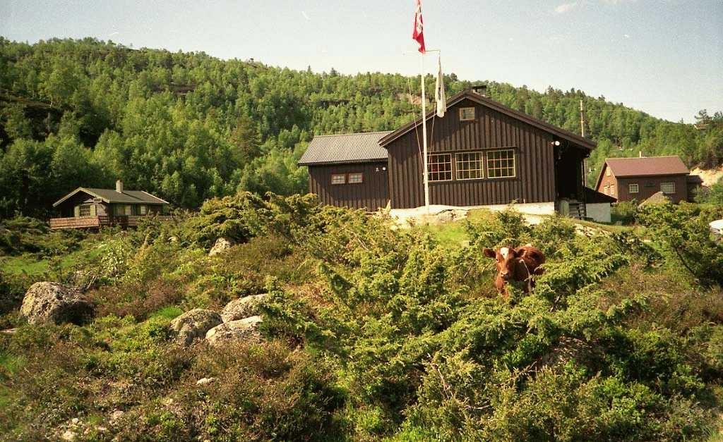 Tre hytter. Flaggstang med norsk flagg og Braathens flagg. En ku i krattskogen foran midterste hytte.