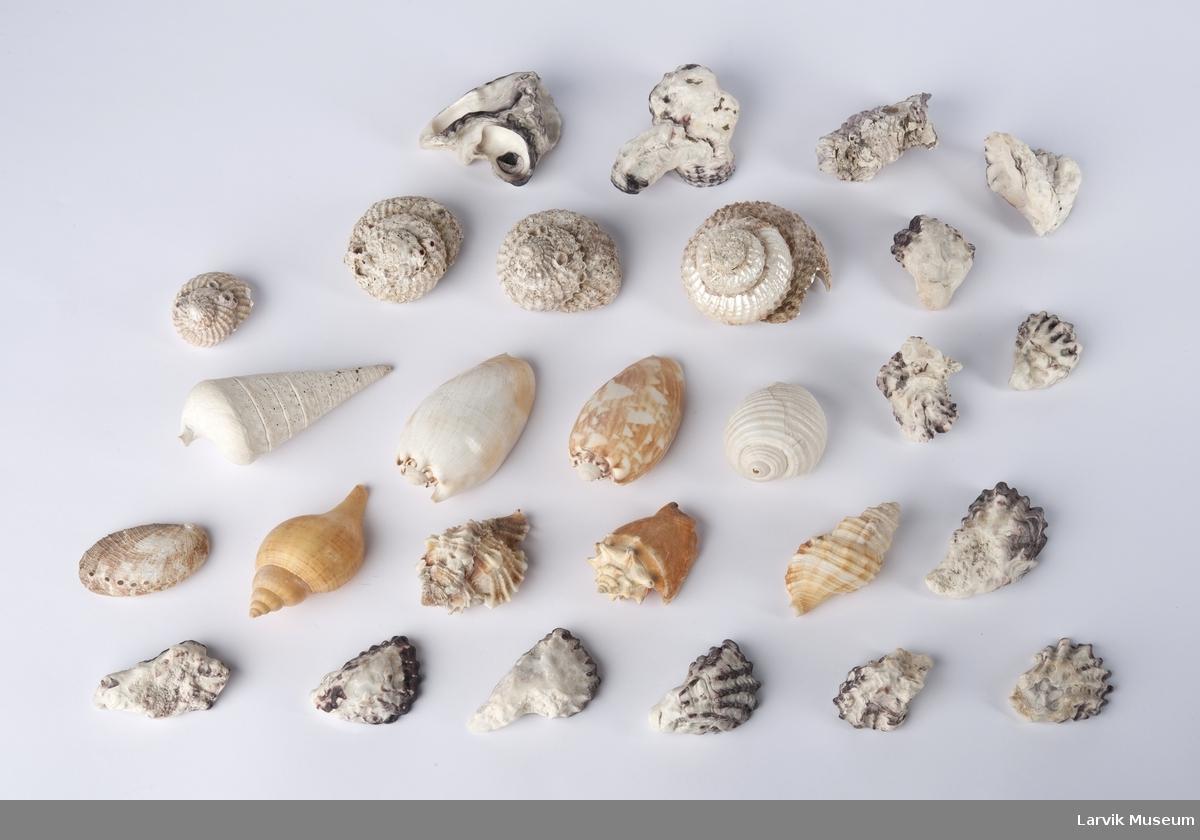 Skjell, sneglehus, koraller, to fisk