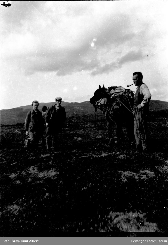 Gruppe, fjelltur med kløvhest