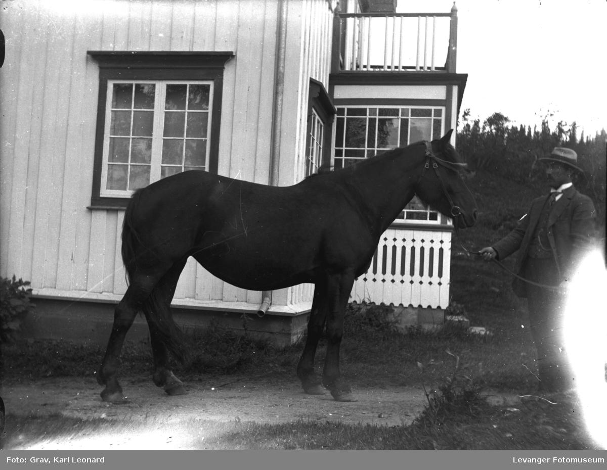Husdyr, mann med hest