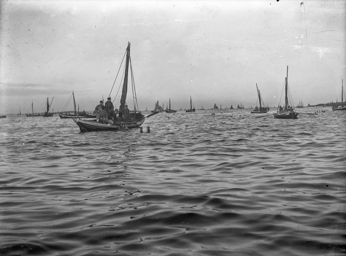 Fra fiskefeltet: mange mindre fiskebåter med fiskere og seilebåter i bakgrunnen.