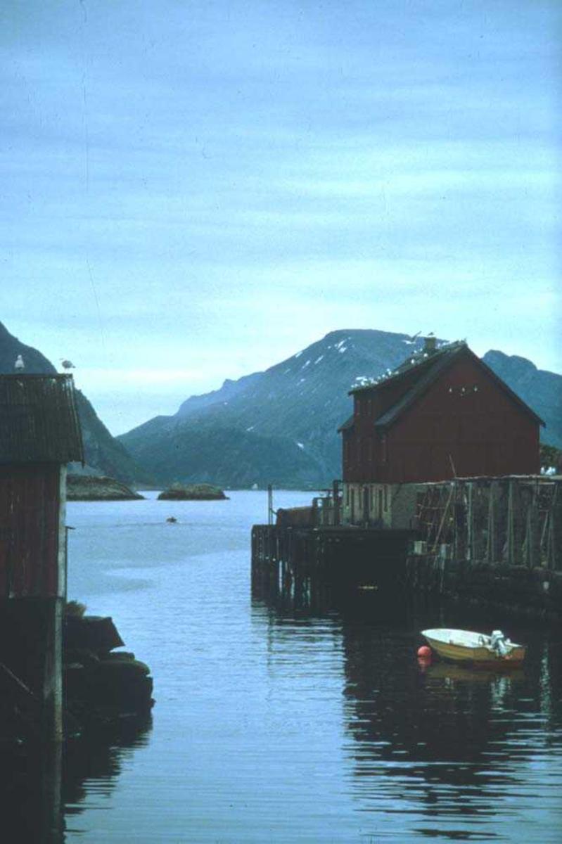Landskap. Fiskevær i Lofoten. Måsene hviler ut på et gammelt bryggehus og venter spent på neste fiskebått