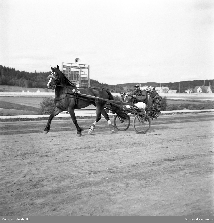 Norsk-svenska kallblodsloppet på Bergsåkerstravet.