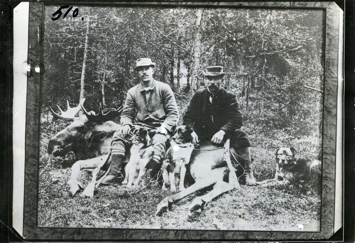 2 menn sittende oppå en skutt elgokse. 3 hunder sitter rundt.