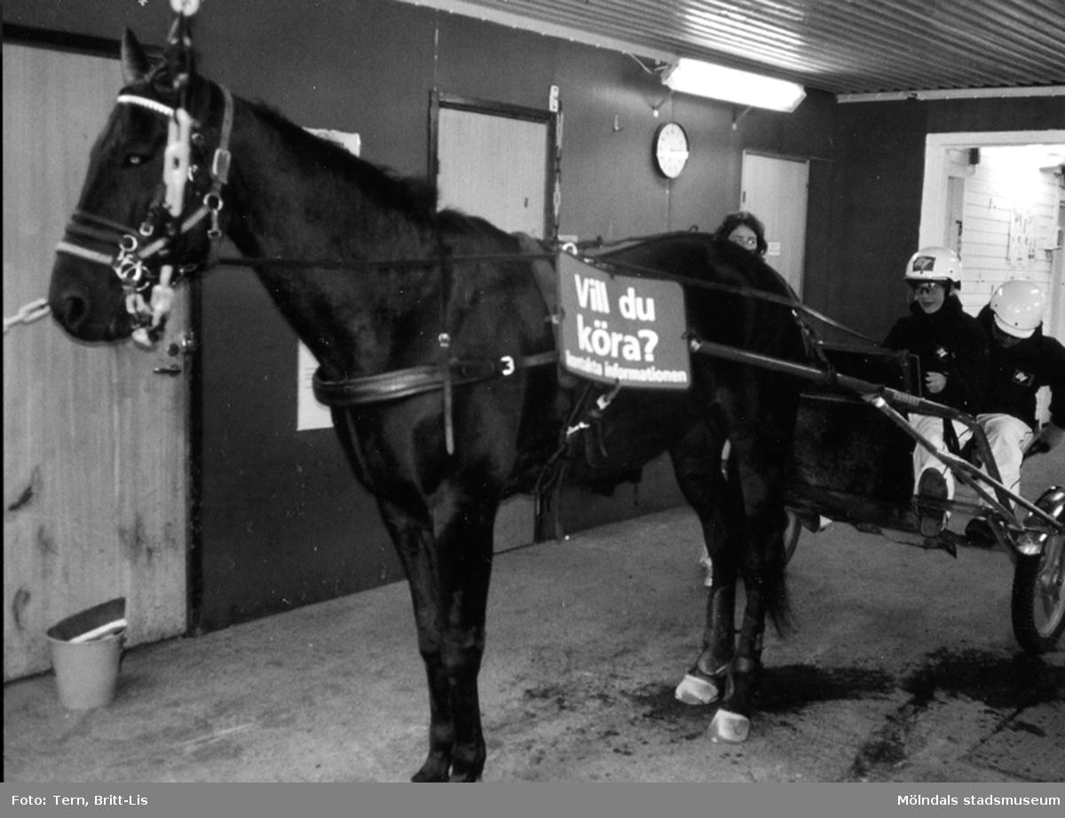 Testa att köra travhäst med Åbys dubbelsulky, en populär aktivitet för banans besökare.    Blandade bilder insamlade inför dokumentation av Åby Stallbacke och Stallgårdar 2015.
