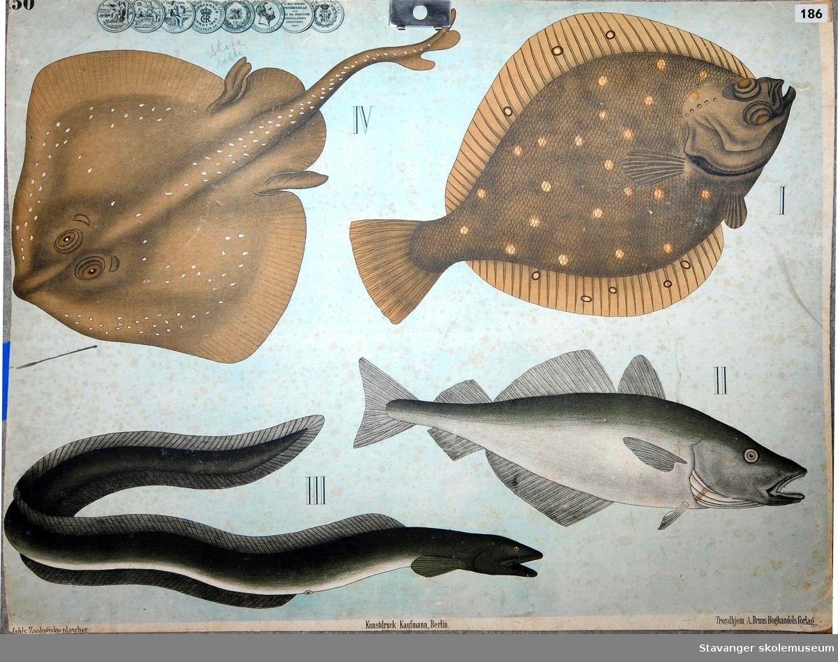 Fisk og ål