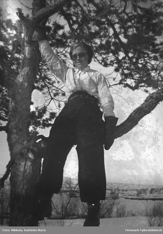 Synnøve Mikkola sitter på en grein i et furutre. Bildet er antakelig tatt i Sør-Varanger, bak henne ser vi et snøkledd landskap