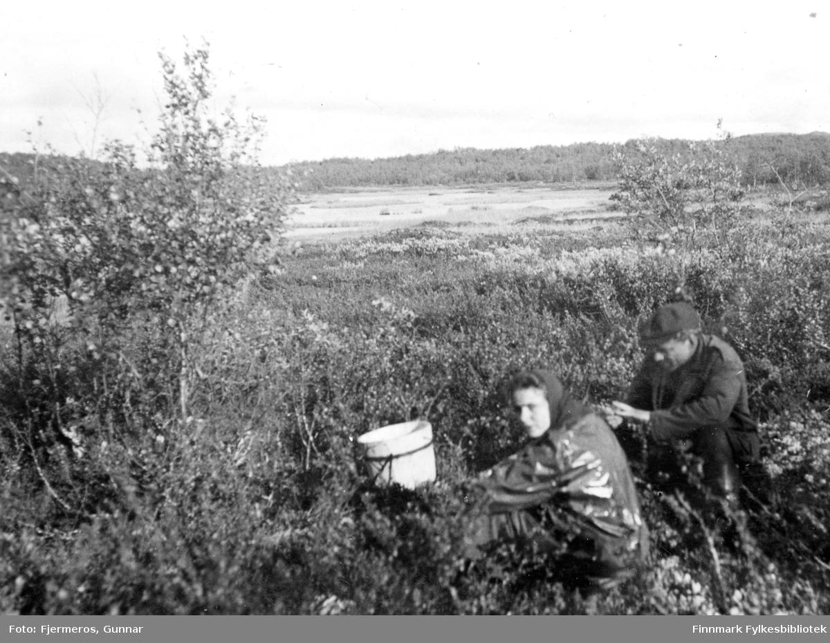 En mann og en kvinne sitter på huk på multebærmyra med et spann foran seg. Iflg. fotografen ble det lite multer den sommeren. Sted og personer er ukjent.