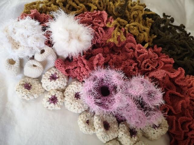 Bilde av anemonepute i utstilling til Oppdag havet