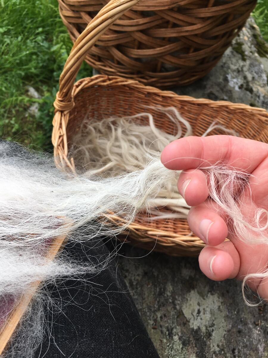hand rører ved ull, korg med ull (Foto/Photo)