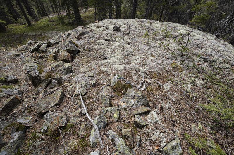 Liten berghald tilvokst med reinlav (kvitkrull), skjerp ved Nr. 6. (Foto/Photo)