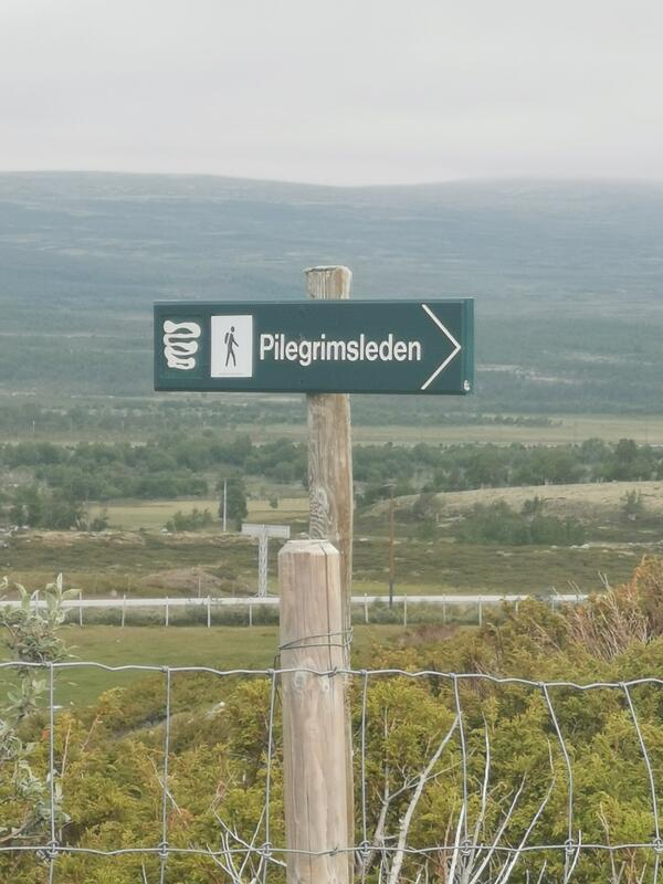 Dovrefjell. Foto: Synøve Stabæk (Foto/Photo)