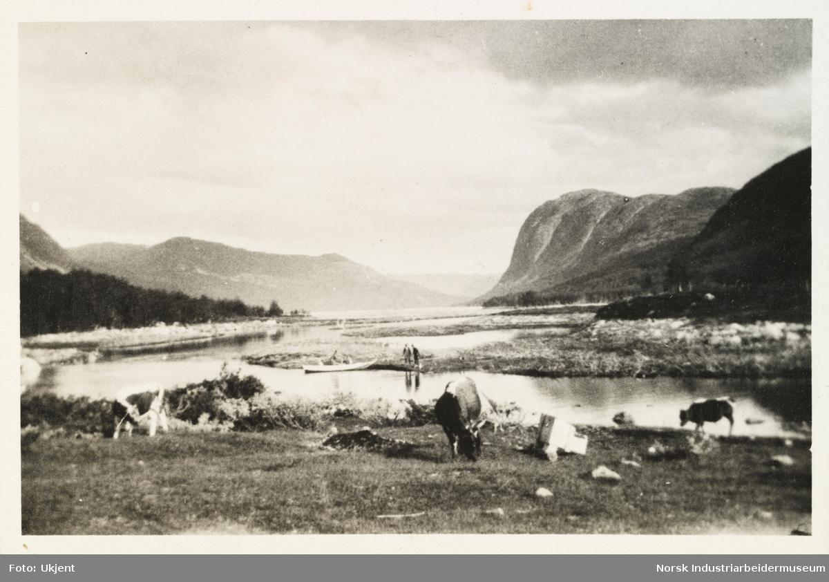 Briskeroe, Møsstrond. Hest og kyr beiter foran utsikt av fjell og Møsvatn. I bakgrunn mennesker og pråm