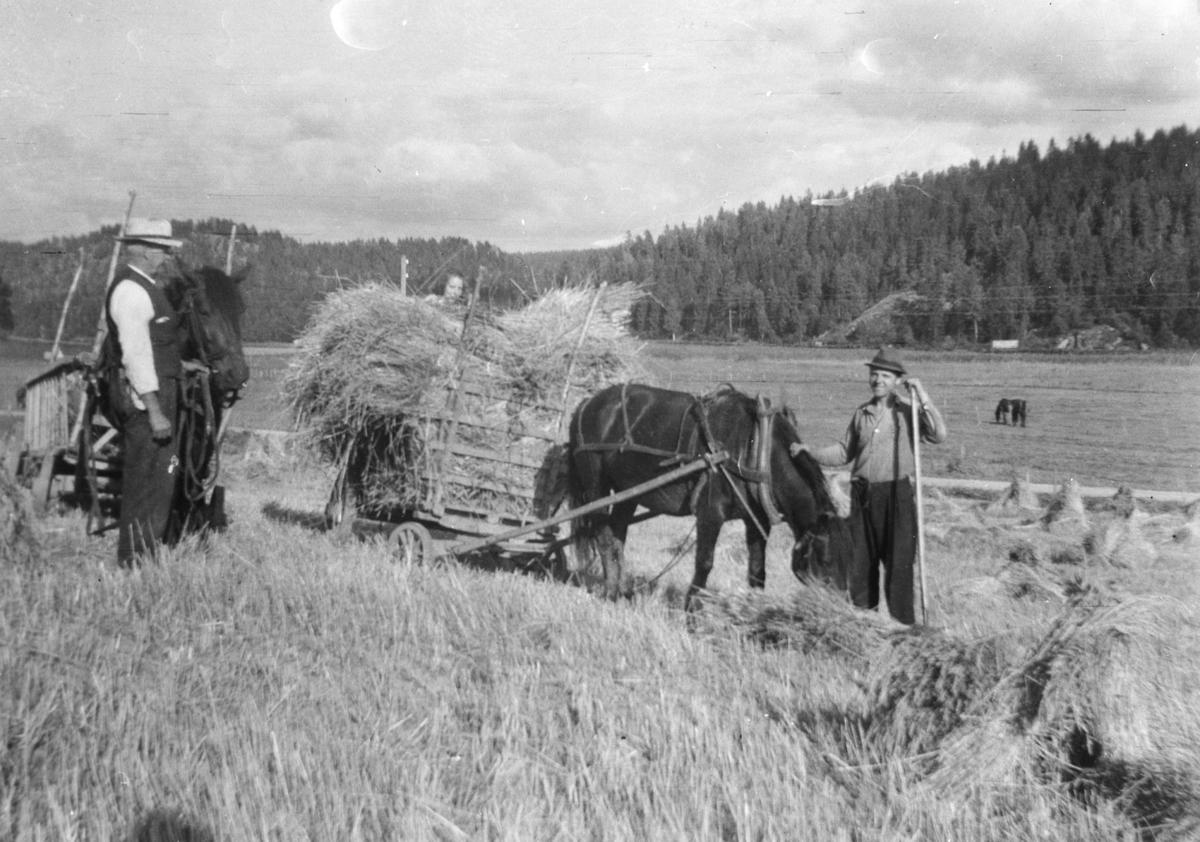 Skuronn. Oscar og Niels Børresen kjører korn