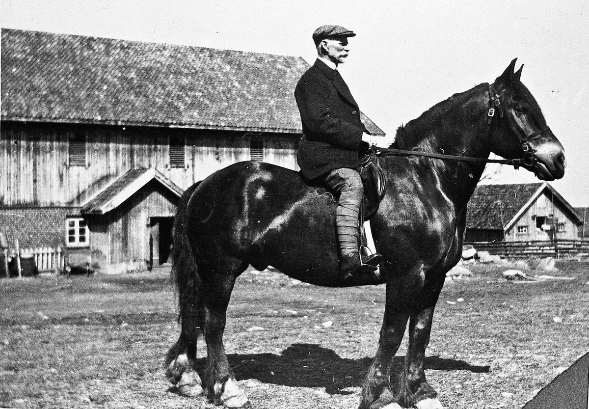 Mann til hest. 1920-30.  Hingsten hette Buar og tilhørte Albert Hveem. Bildet er tatt på Slagsvoll, Toten.