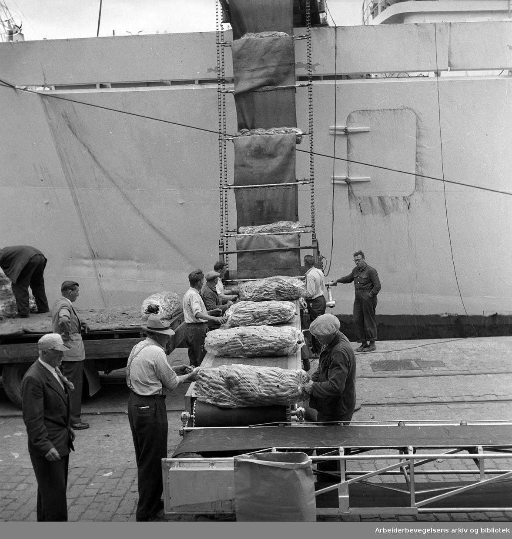 Oslo havn, lossing av bananer på samlebånd,.juli 1957