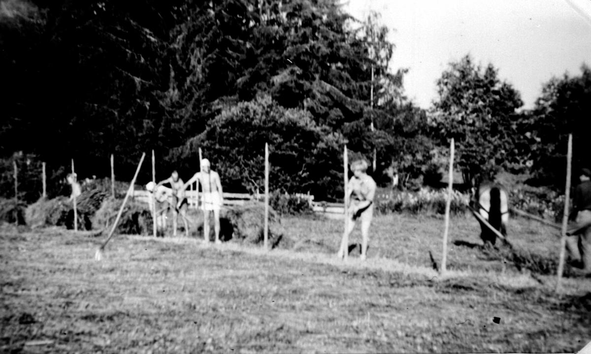 Høyonn på Tørud gård, Ringsaker. Hesjing av høy. Hest med sleperive.