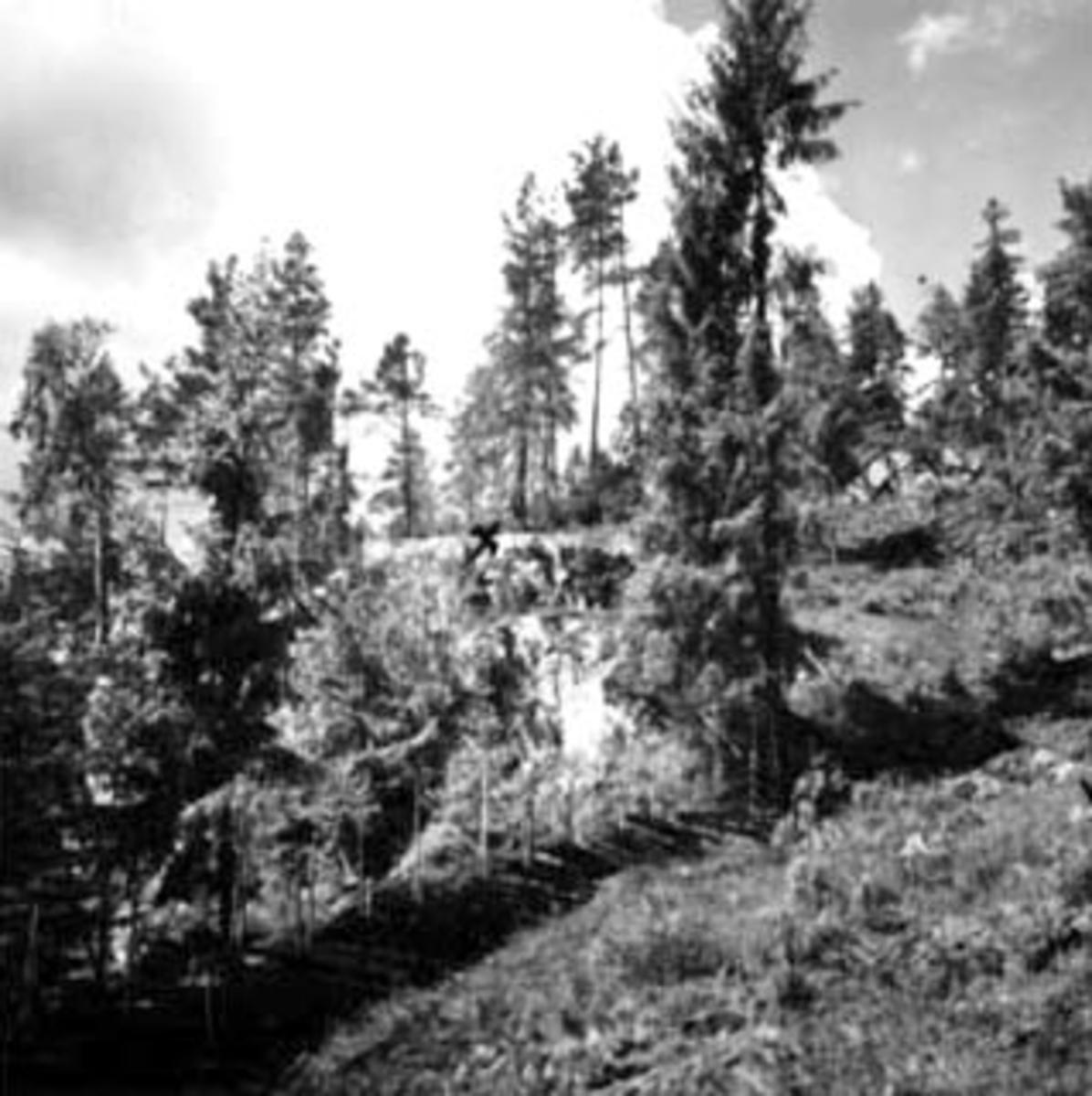 Domstuguberget, prestergardsskogen, bygdeborg fra folkevandringstiden. Oppmålt av Anders Hagen fra universitetets oldsaksamling i juni 1943.