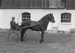 Hr. P.O. Husby, hest fotogr. paa Leangenbanen