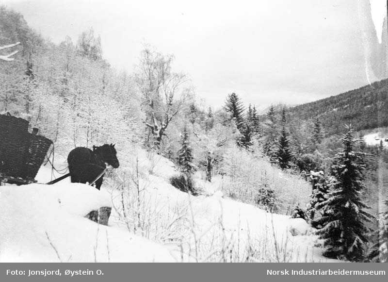 Vinter. Kjøring med hest og slede ned fra staulen i Haukåsgrenda i øvre Austbygde
