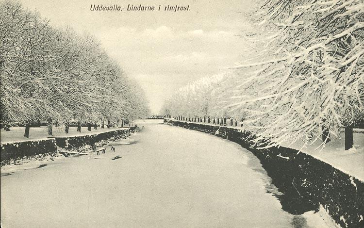 "Tryckt text på vykortets framsida: ""Uddevalla, Lindarna i rimfrost."" ::"