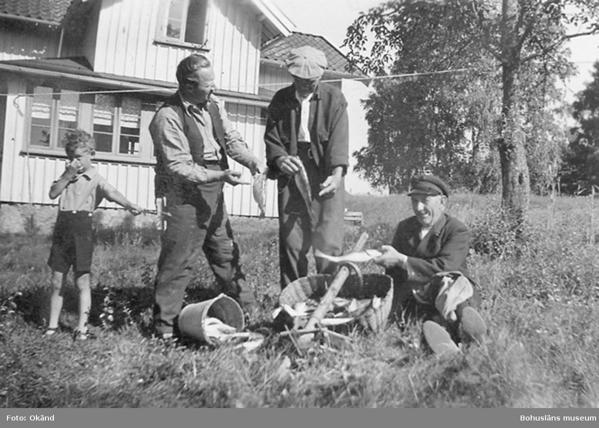 Det stora fiskefänget 1920.
