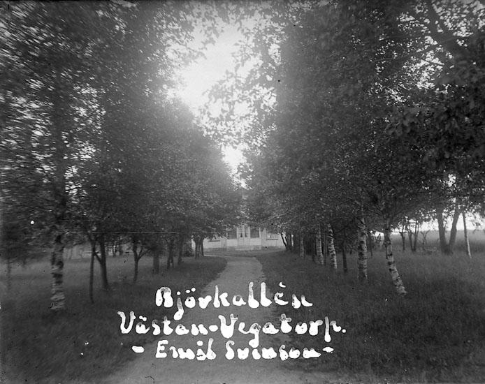 """Enligt text på fotot: """"Björkallén Västan-Vegatorp. Emil Svensson""""."""