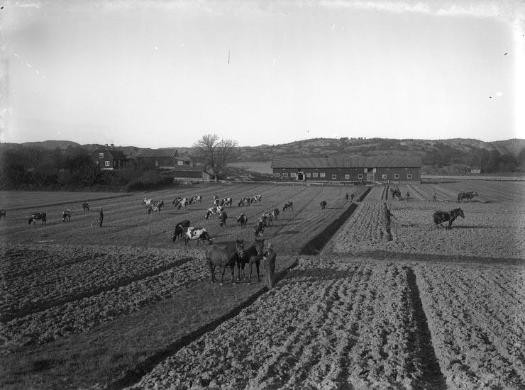 "Enligt fotografens noteringar: ""Omkring år 1913 Uteby Brodalen."""