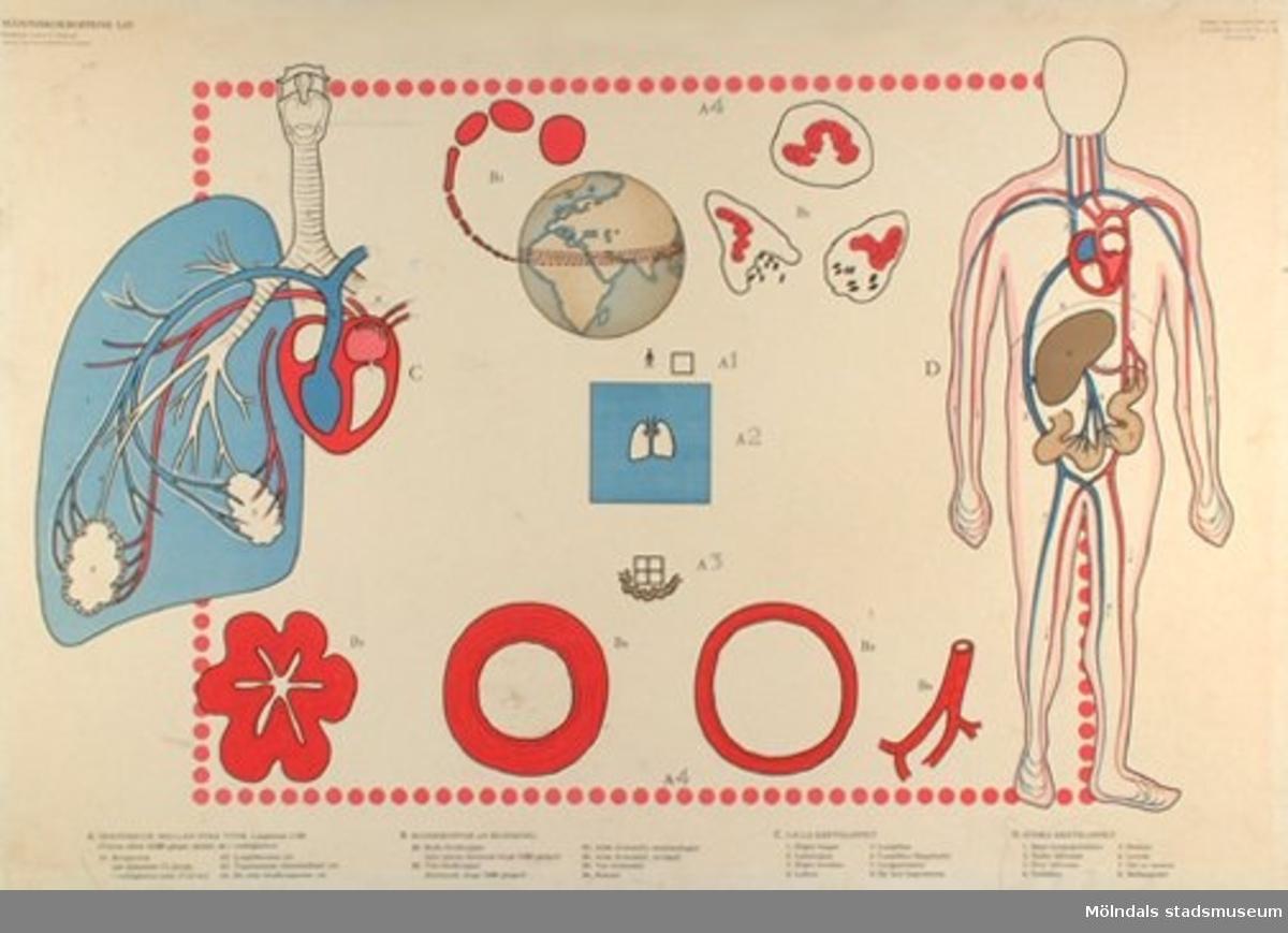 :1: Celler.:2: Hud.:3: Skelett och leder.:4: Muskler.:5: Andnings- och cirkulationsapparater.:6: Ämnesomsättningen.:7: Nervsystem och sinnesorgan.