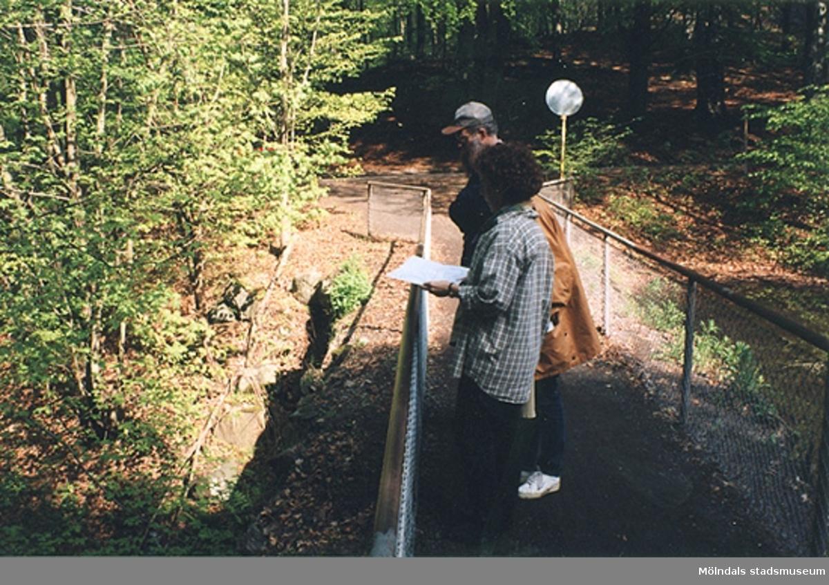 Från vänster står Ulla Hasselqvist, Sara Fritsch och Lars Gahrn på bron vid fördämningen i Lackarebäcksskogen och tittar mot vattenfallet.