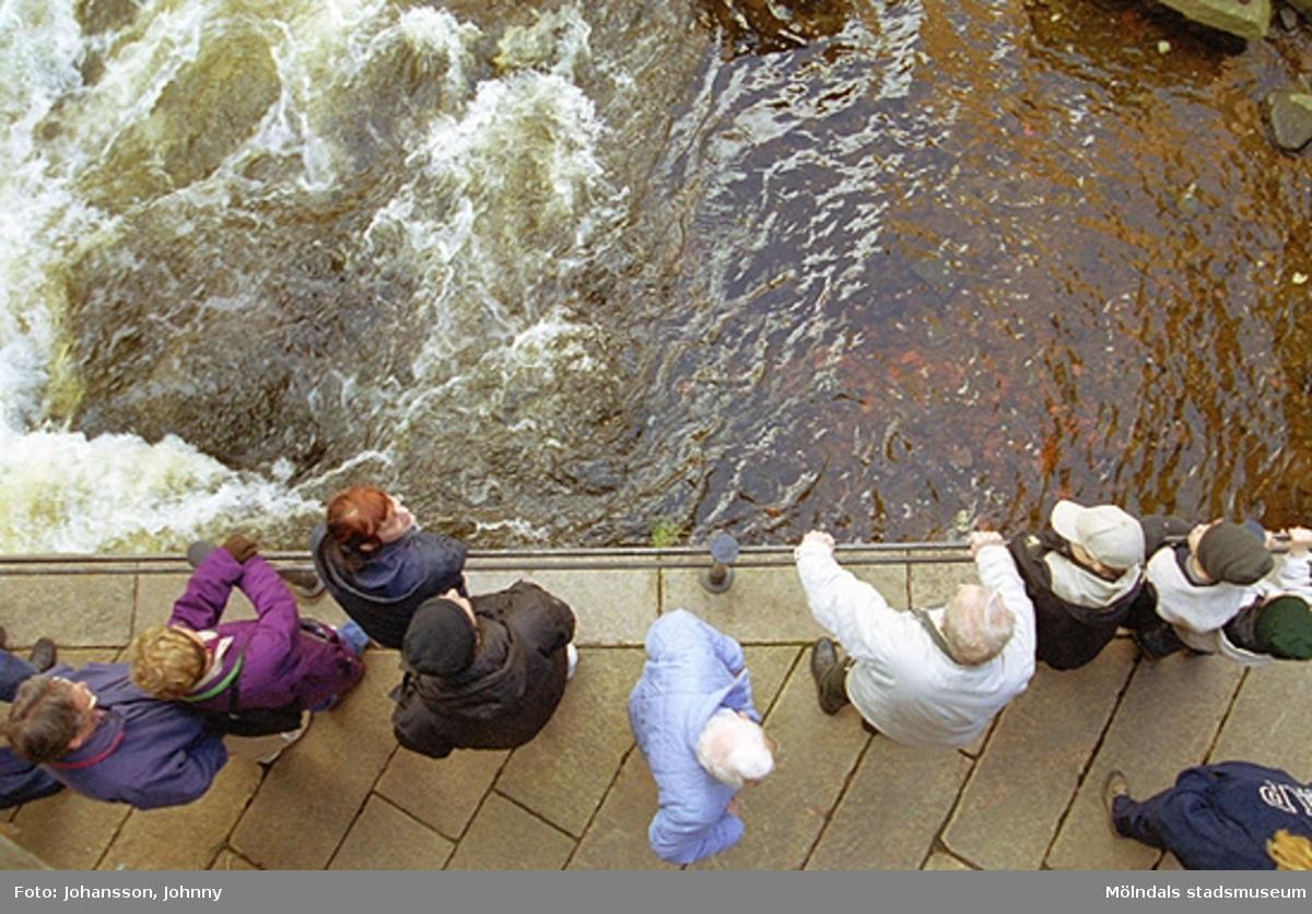 Besökare, fotograferade från ovan, tittar ner i forsen. Antikvarie Sofia Larsson (rött hår, mörkblå jacka) står i mitten till vänster.