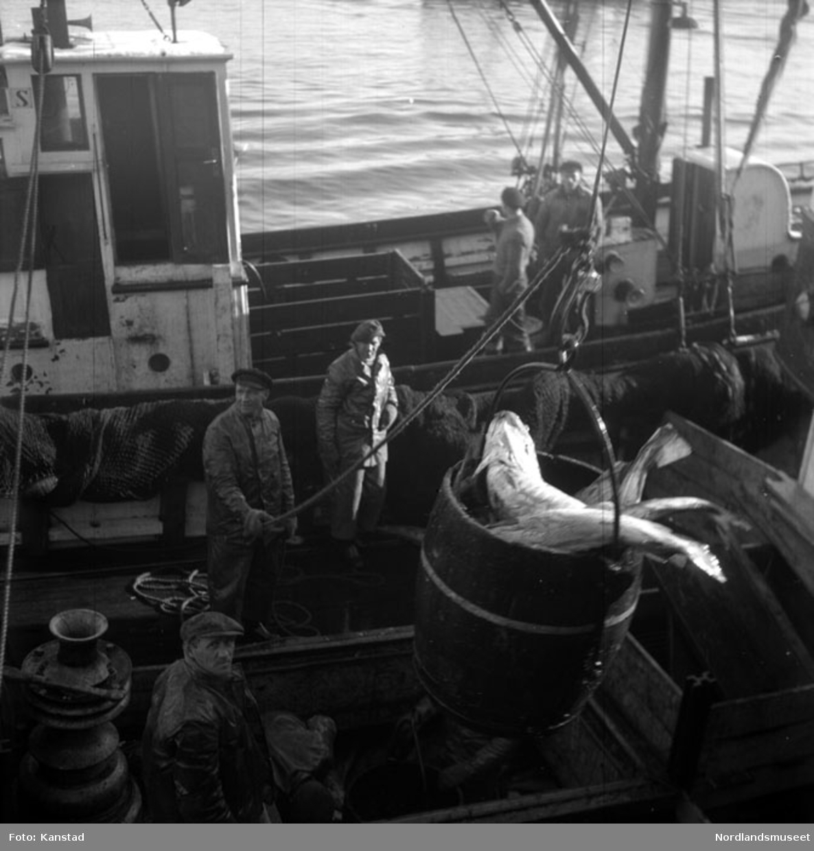 Båt; båtlag; fisk i tønner