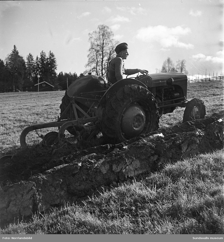 Demonstration av höstplöjning med en lantbrukstraktor i Norrböle, Attmar.