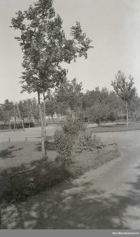 Uskadd del av Solparken, nordvestre hjørne, busker og trær, sti