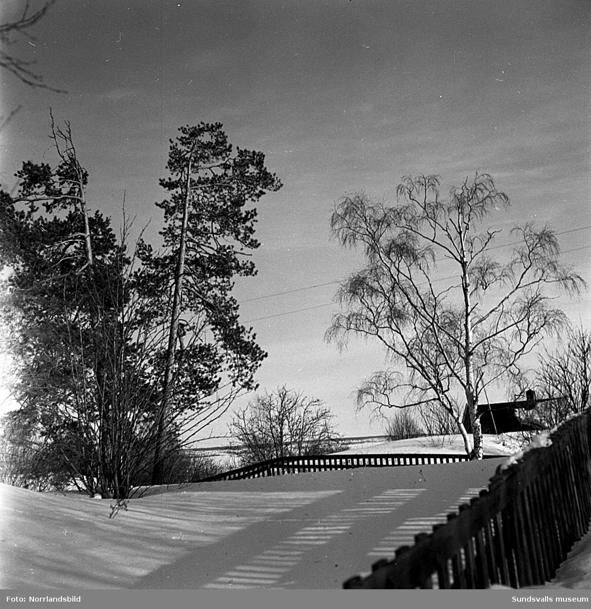"""Reportagebilder från Stenhammaren i Fagervik, Timrå.  För de flesta Sundsvallsbor är Stenhammaren mest känt som en del av Södermalm, men förflyttar man sig ett par mil norrut, till Fagervik, finner man även där ett område med samma namn. Det är hjärtat i den gamla bebyggelsen som uppstod under sågverkstiden i Fagervik. Det var där Ville Henrikssons pappa byggde först en, och sedan ytterligare en, liten stuga av utrangerade brädor från sågverket. Tomterna fick arbetarna köpa för en spottstyver då marken var stenig och ansågs värdelös. På den första bilden från slutet av mars 1951 syns Ville Henriksson, som fortfarande bor kvar på föräldragården, i full färd med att bära ved. Ved som han sågat av virket från den äldsta av stugorna på tomten eftersom: """"Ve'n är så förbannat dyr""""."""