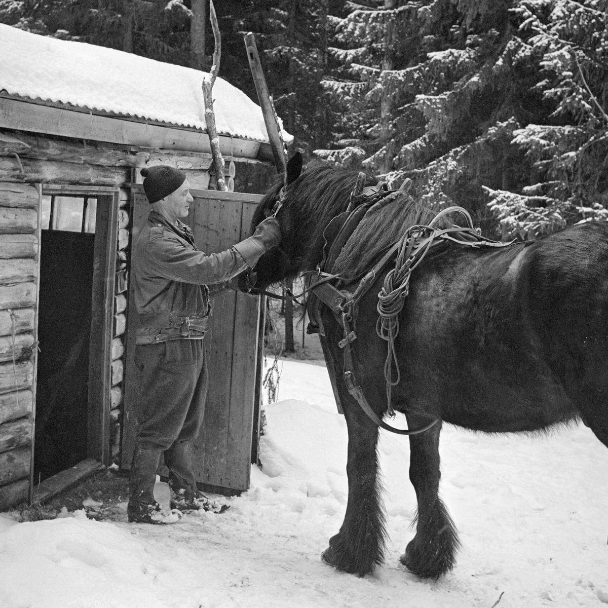 Tømmerkjøring, Svartholtet, Elverum, Hedmark.