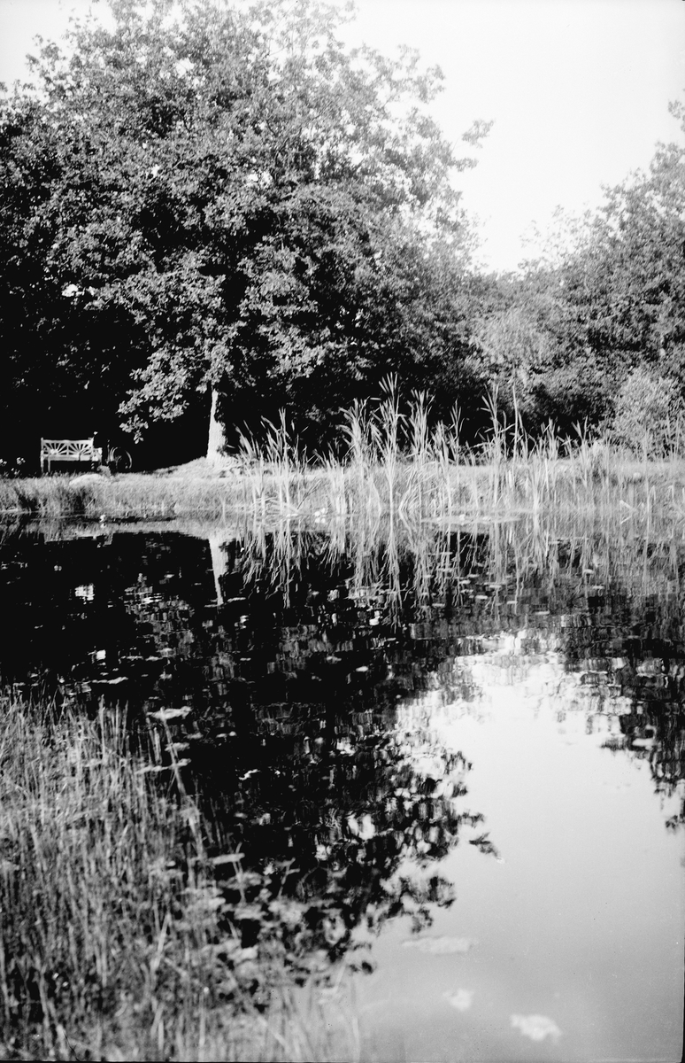Drottning Victorias bilder. Damm i parken vid Solliden. Nr 24